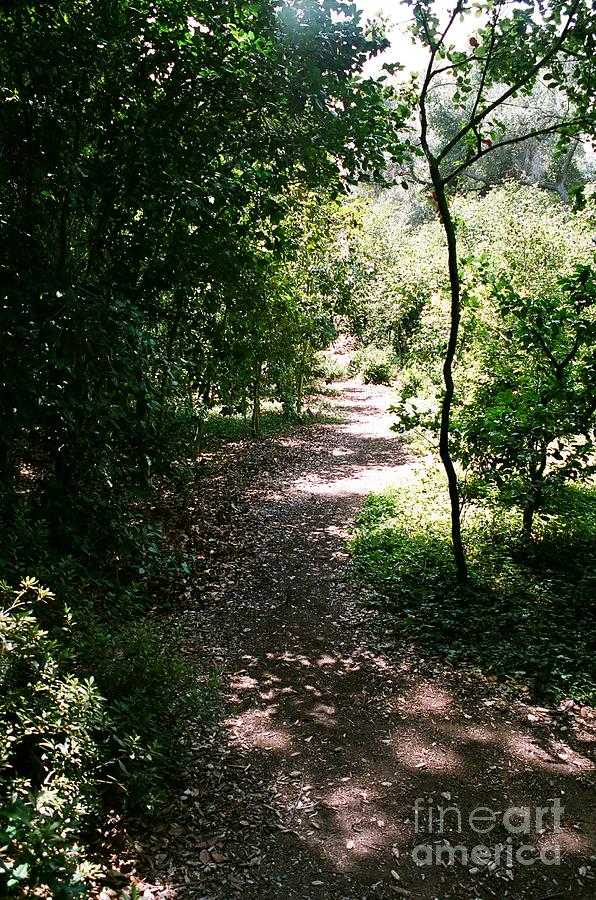 Path Photograph