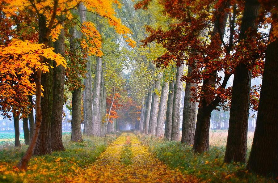 Path Digital Art - Path by Dorothy Binder