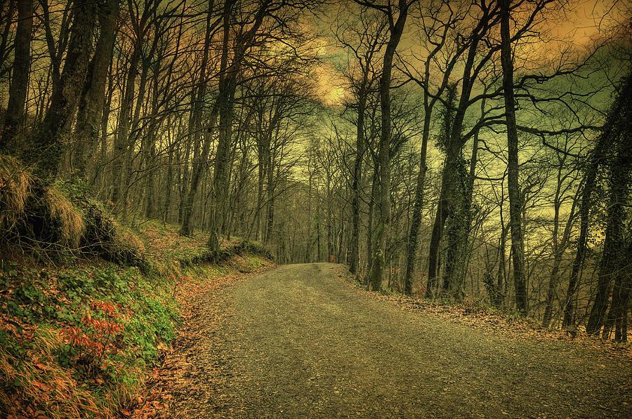 Woods Photograph - Path IIi by Zapista Zapista
