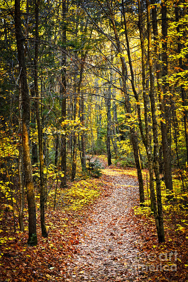 Trees Photograph - Path In Fall Forest by Elena Elisseeva