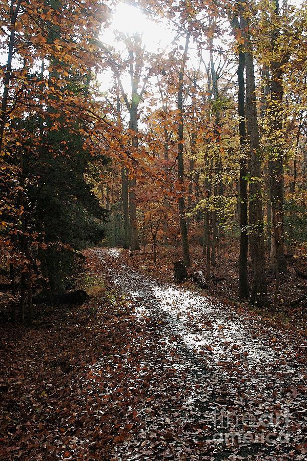 Autumn Photograph - Path In The Autumn Color by Hideaki Sakurai