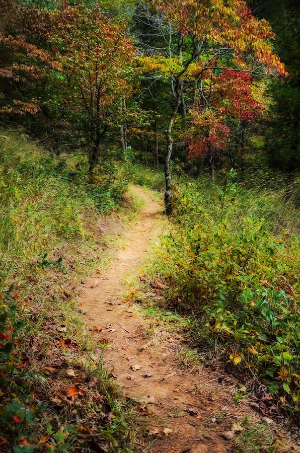 Adams Photograph - Path in the Prairie by Diana Boyd
