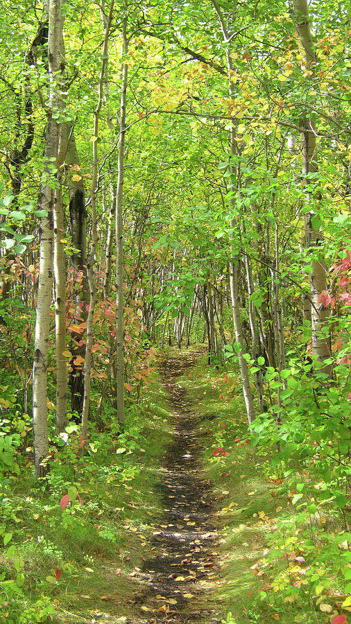 Woods Photograph - Path in the woods by Emma Frost