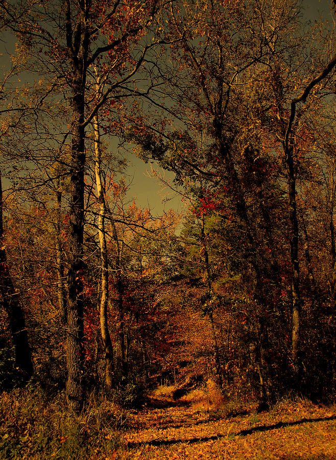 Woods Photograph - Path Into The Woods by Nina Fosdick