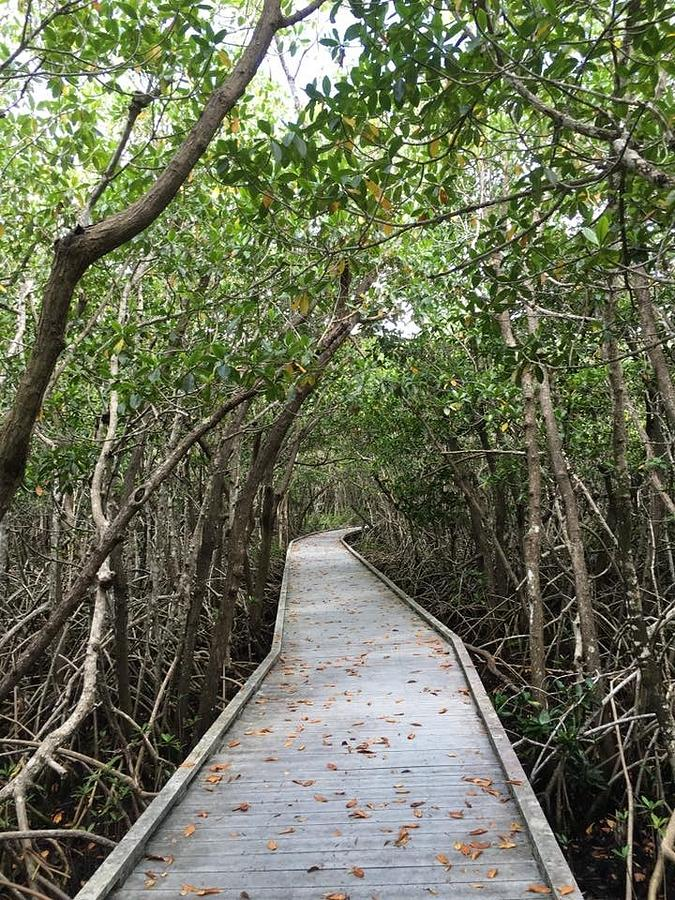 Cape Coral Photograph - Path Less Traveled  by Joanne Parks
