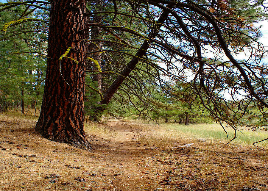 Nature Photograph - Path of Enlightenment by Ben Upham III