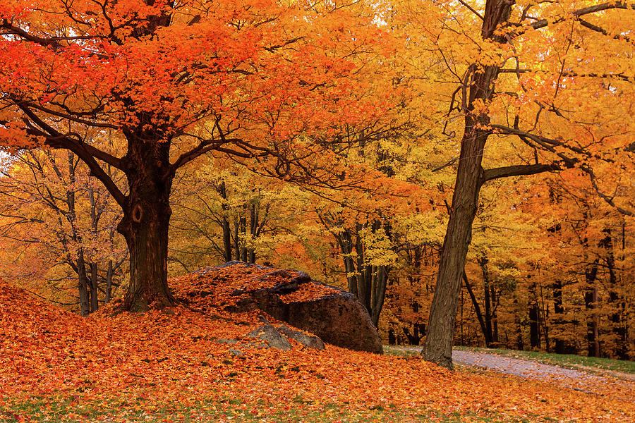 Autumn Photograph - Path Through New England Fall Foliage by Jeff Folger
