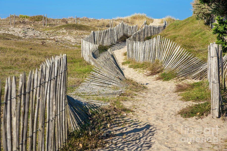 Path Through The Dunes Photograph