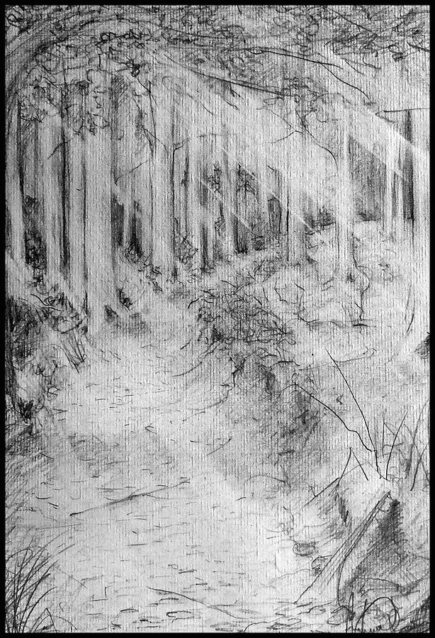 Drawing Drawing - Path Through Trees by Andrew Boyce