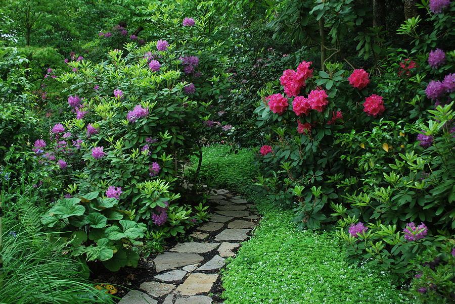 Garden Photograph - Path To Hidden Valley by Linda Sramek