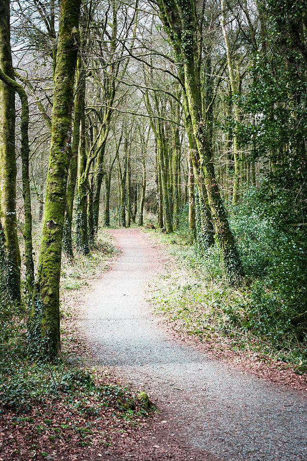 Path Photograph - Path To The Forest by Victor Vega