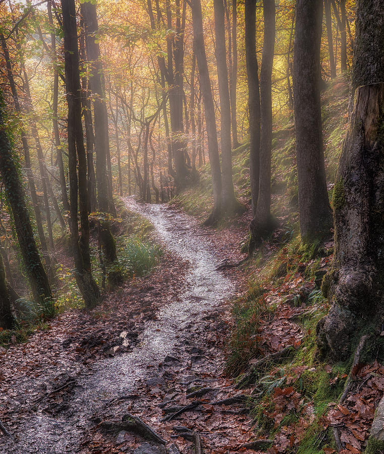 Brecon Beacons Photograph - Path Trough The Woods by Graham Norton