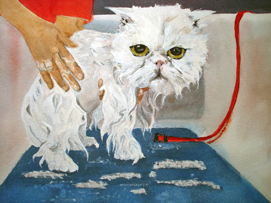 Cat Painting - Pathetic Persian Gets A Bath by Kerra Lindsey
