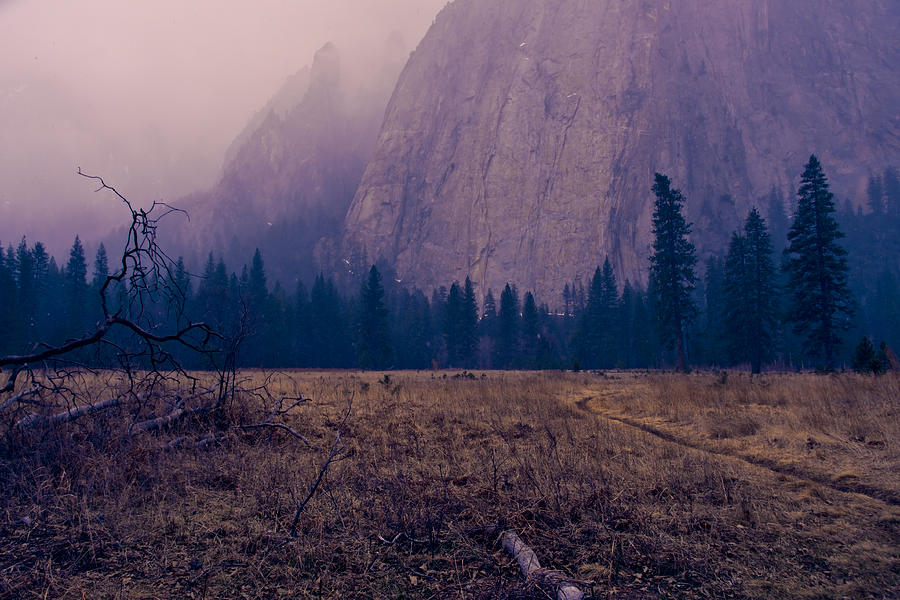 Pathway During First Snow In Yosemite Valley by Priya Ghose