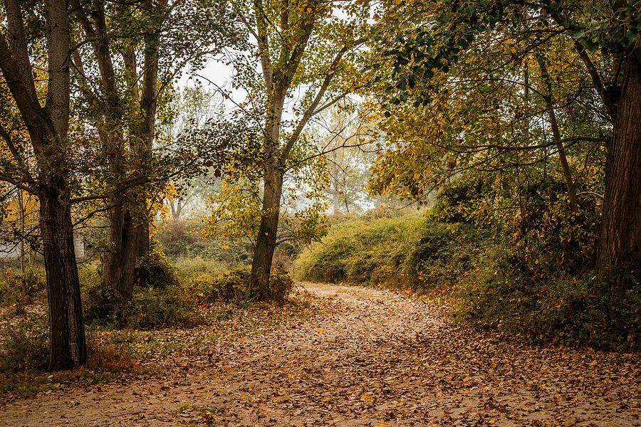Scenic Photograph - Pathway To Fog by Ioannis Vasilakakis