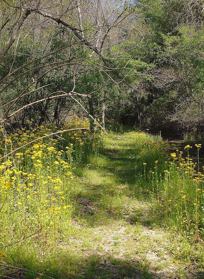 Pathway To Heavan Photograph by Alicia Morales