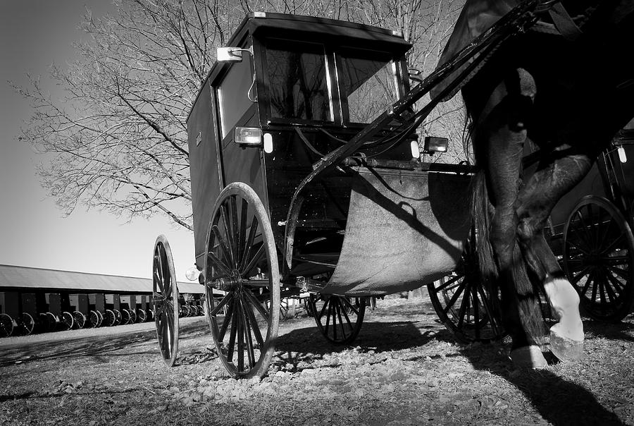 Amish Photograph - Patience by Kevin Brett