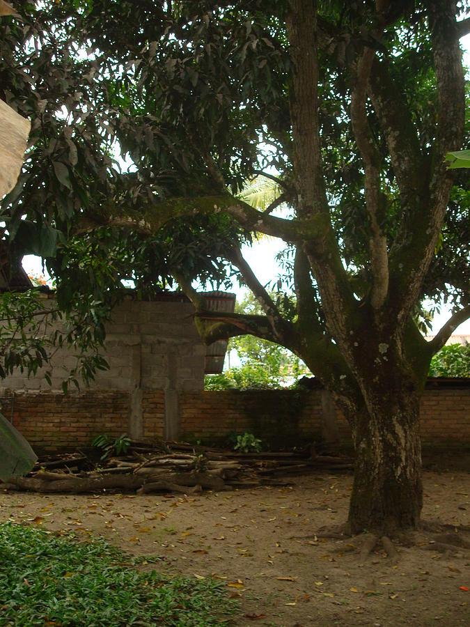 patio 6 by Carlos Paredes