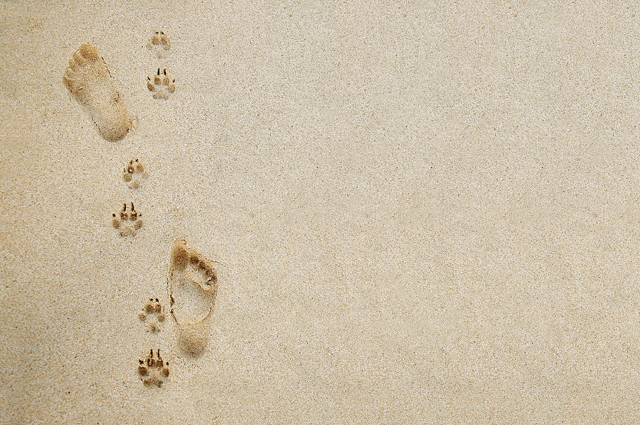 Adorable Photograph - Paw And Footprint 1 by Brandon Tabiolo - Printscapes