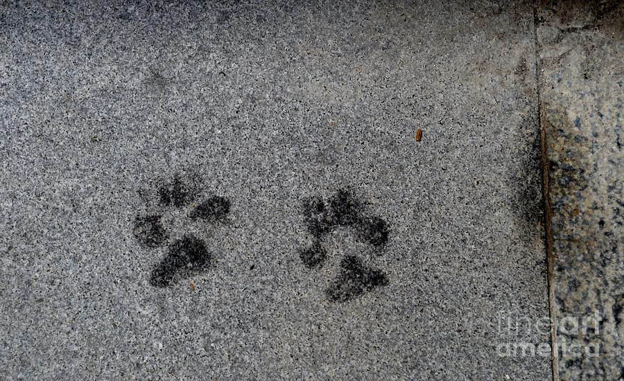 Paws Photograph - Paws by Photos  By Zulma