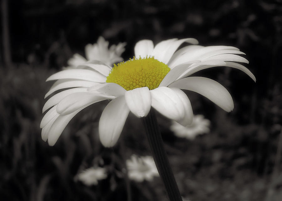 Flower Photograph - Pay It Forward by JAMART Photography