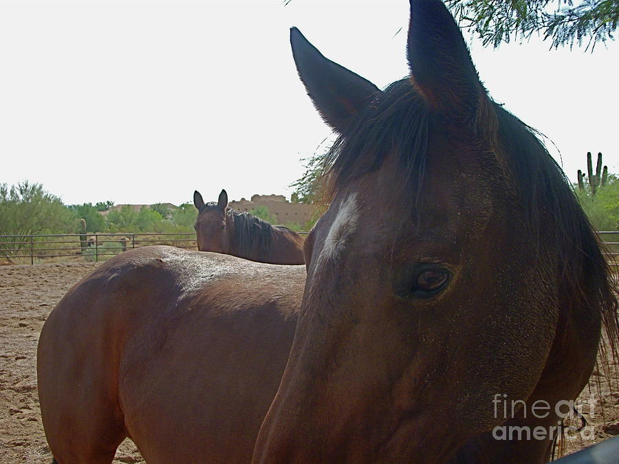 Horse Photograph - Paying Attention by Amy Strong
