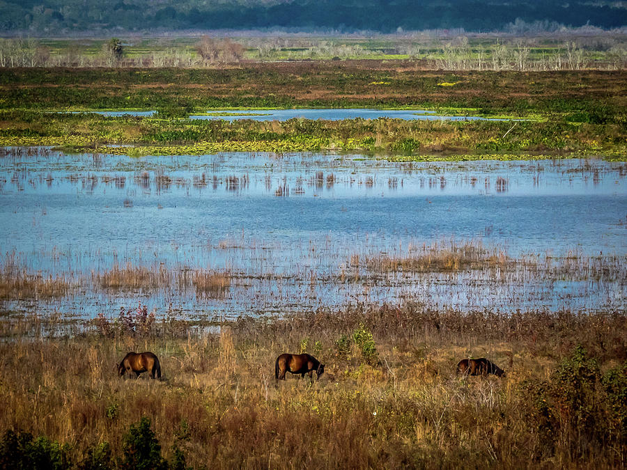 Paynes Photograph - Paynes Prairie by Craig V Walters