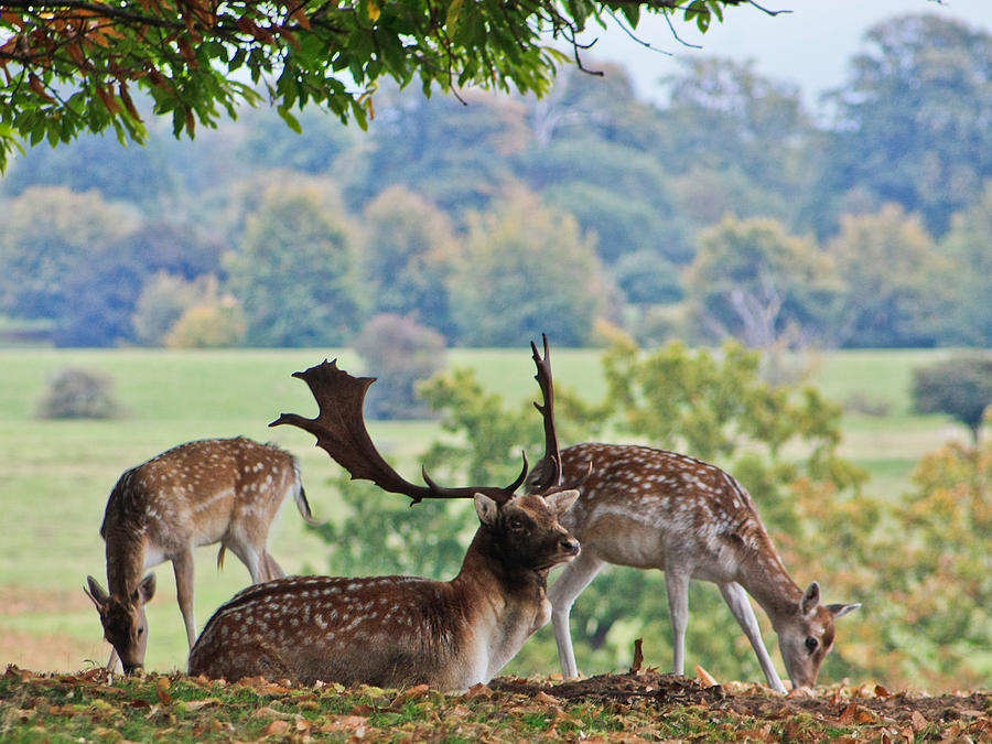 Deer Photograph - Peace And Quiet by Dawn OConnor