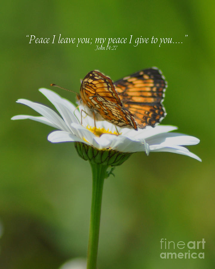 Diane Berry Photograph - Peace I Leave You by Diane E Berry