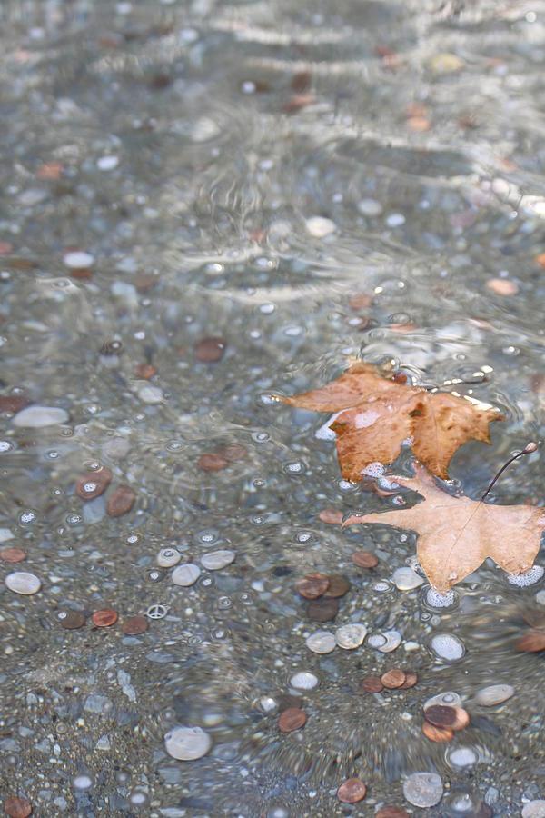 Leaves Photograph - Peace by Lauri Novak