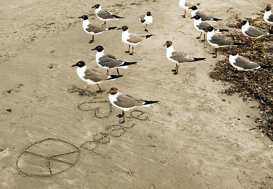 Americana Photograph - Peace On The Beach by Marilyn Hunt