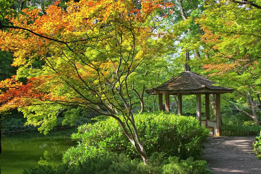 Botanical Photograph - Peaceful Autumn by Joan Carroll