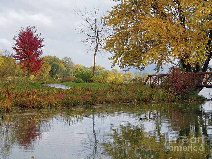 Peaceful Autumn Trio With Reflections by Kari Yearous
