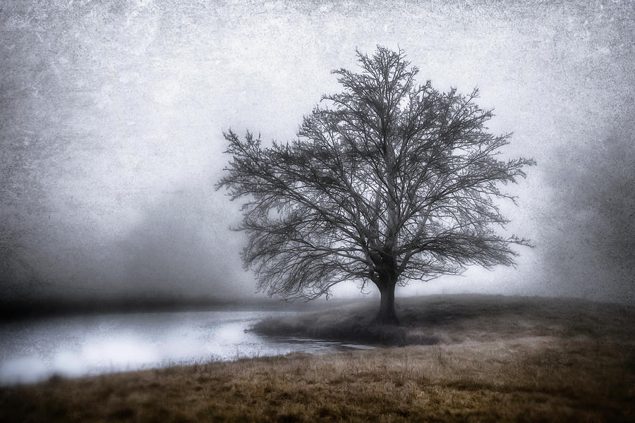 Fog Photograph - Peaceful Country Setting by Garett Gabriel