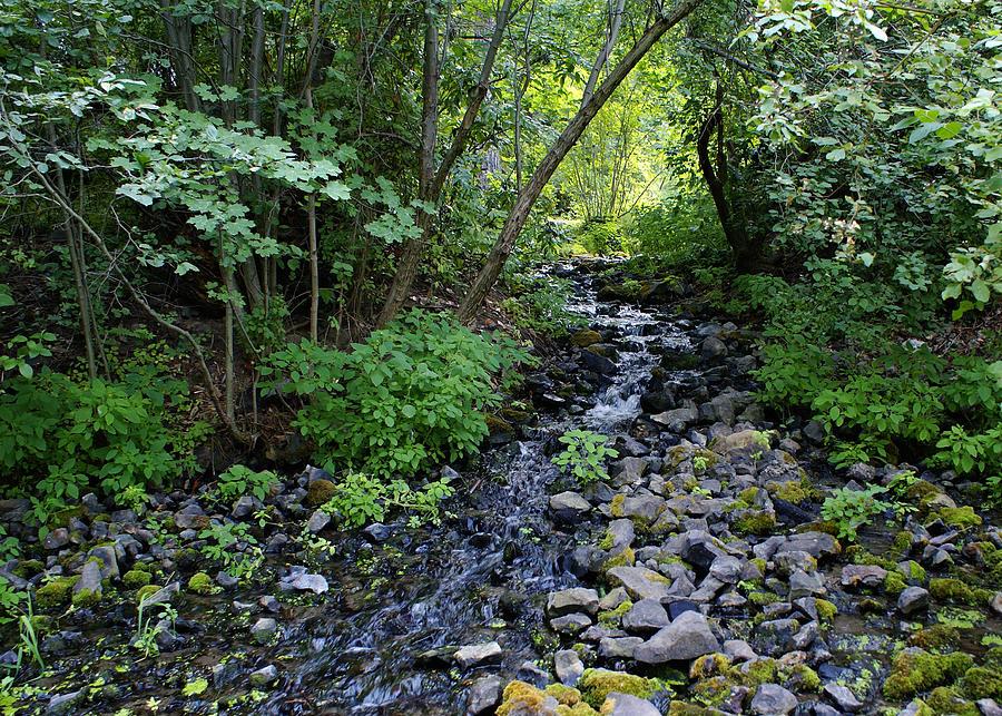 Creek Photograph - Peaceful Flowing Creek by Ben Upham III