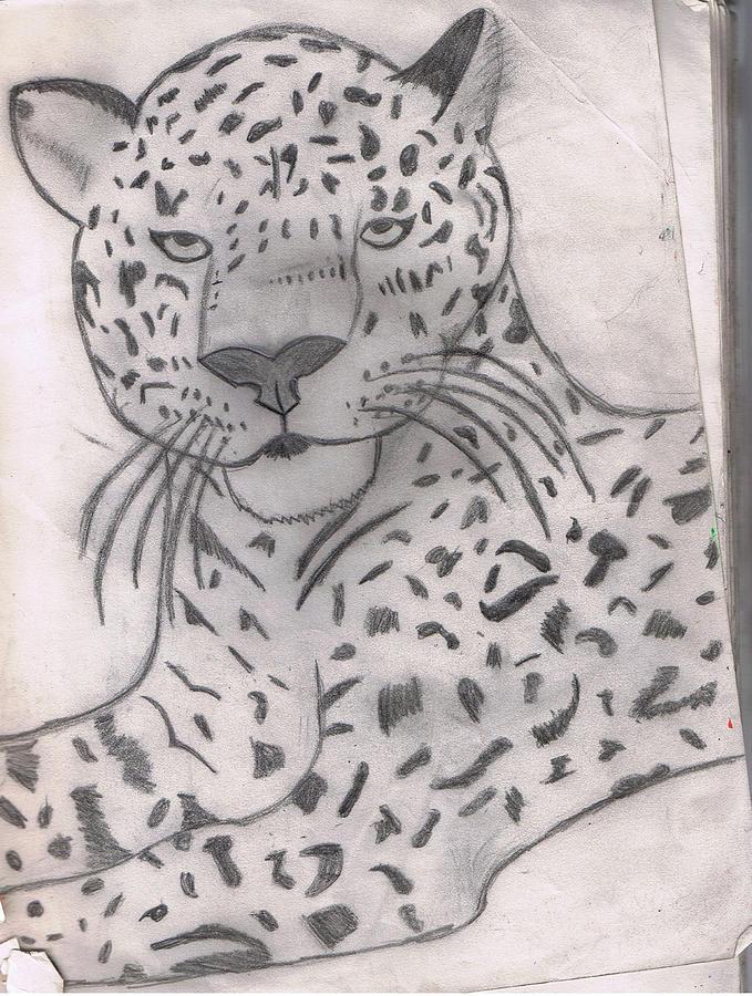 Leopard Drawing - Peaceful Leopard by Rebecca Mccann