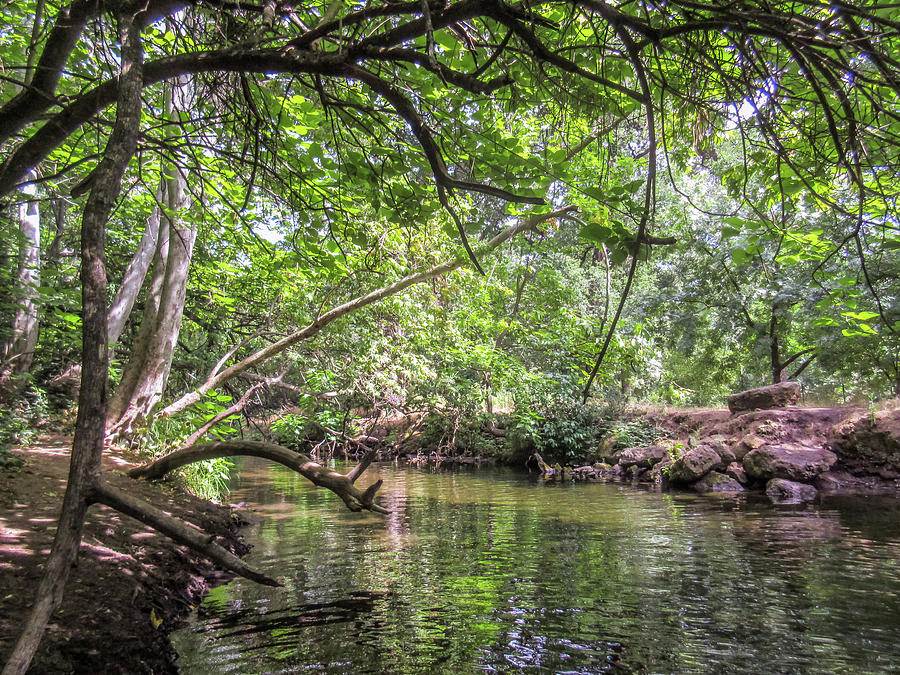 Genial Peaceful Living At The Big Chico Creek By Mike Dallo
