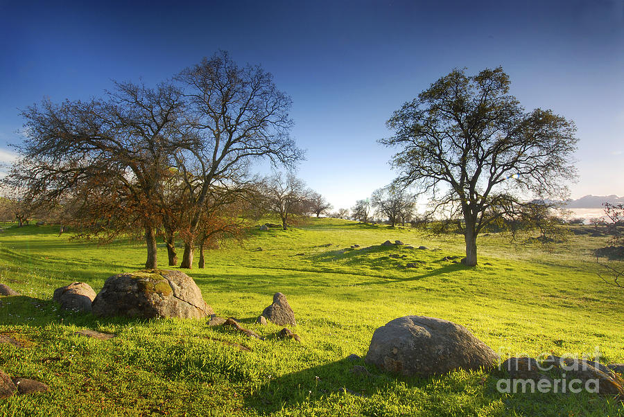 Peaceful Morning Scenery From A Local Park Photograph