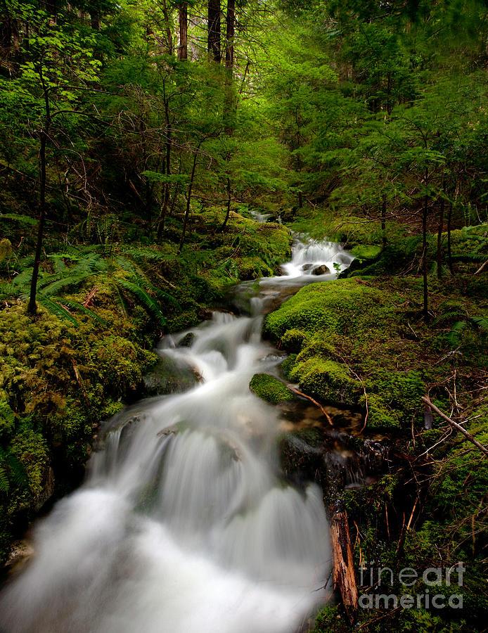 Cascades Photograph - Peaceful Stream by Mike Reid