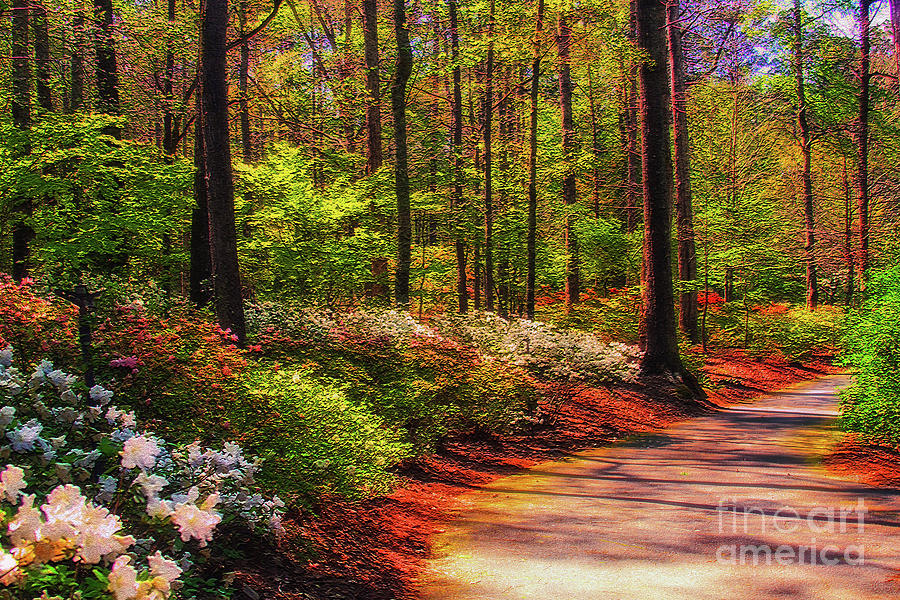 Peaceful Walk Photograph by Geraldine DeBoer