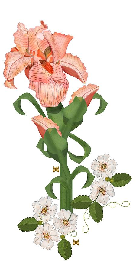 Iris Flower Painting - Peach Colored Iris Botanical by Anne Norskog