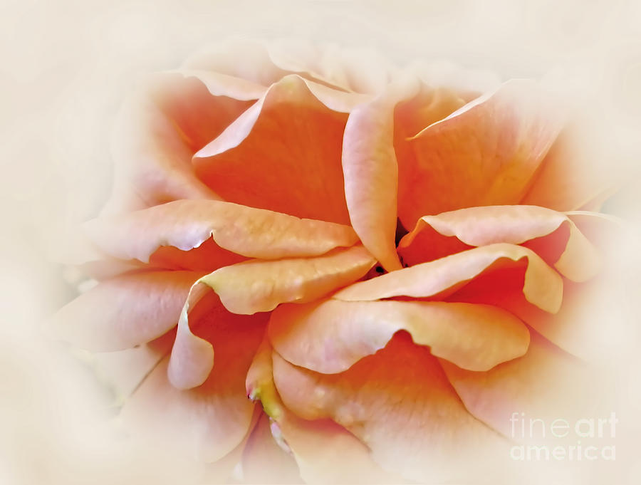 Photography Photograph - Peach Delight by Kaye Menner