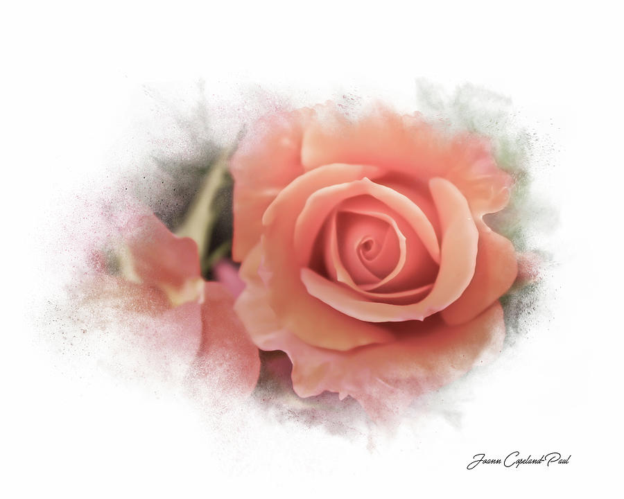 Peach Perfection by Joann Copeland-Paul