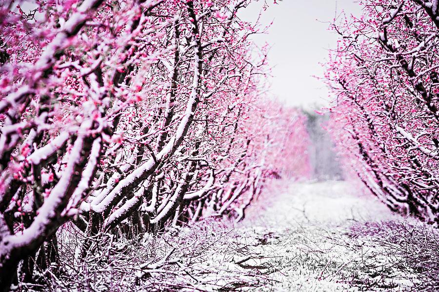 Rüyada Birden Mevsimsiz Çok Kar Yağması Görmek