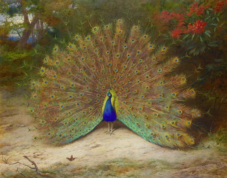 Peacock And Peacock Butterfly By Archibald Thorburn, 1917. Painting