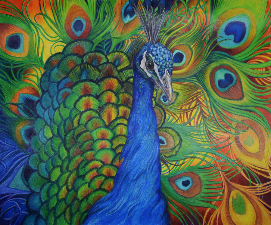 Peacock Drawing Drawing by Sonja Oldenburg