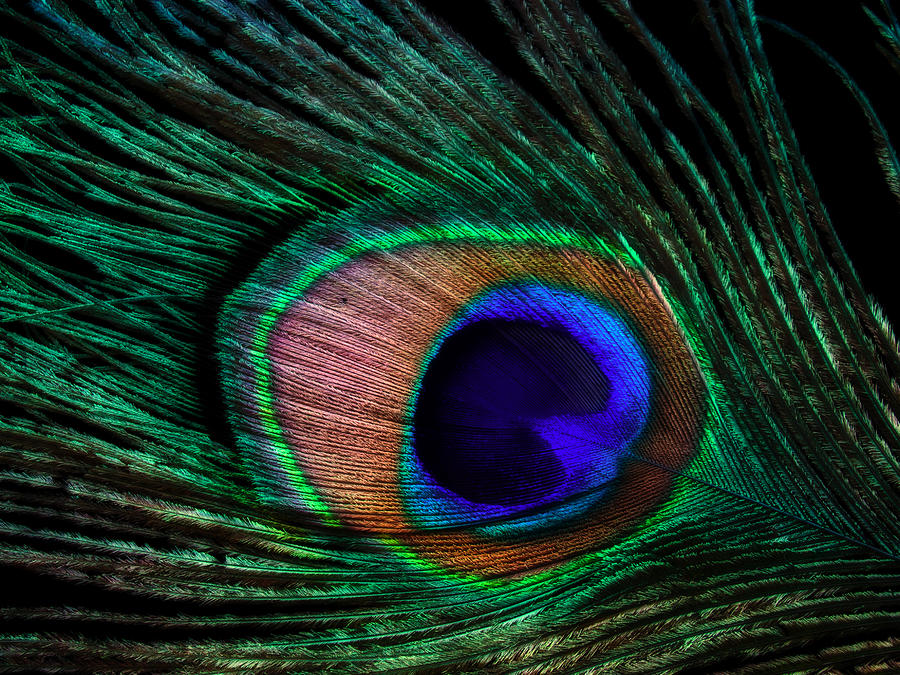 Peacock Photograph - Peacock Feather by June Marie Sobrito
