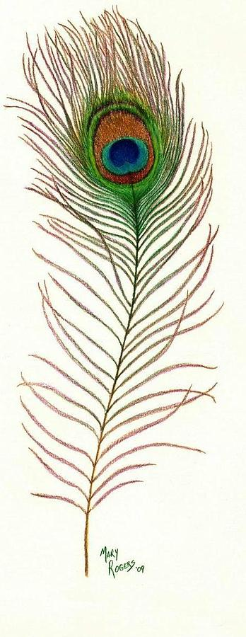 Feather Drawing - Peacock Feather by Mary Rogers