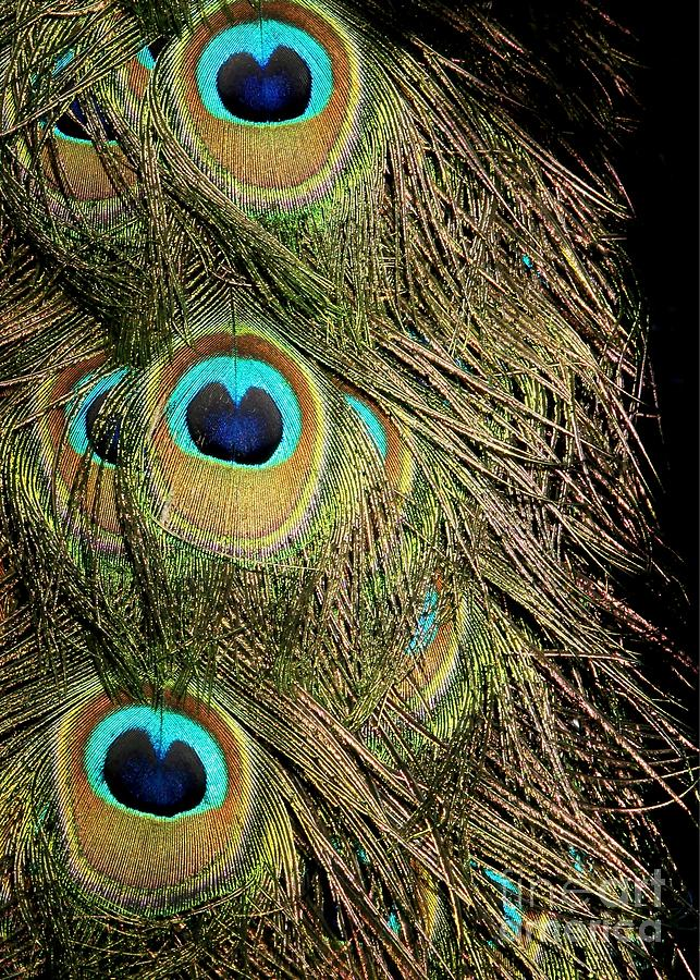 Feathers Photograph - Peacock Feathers by Sabrina L Ryan
