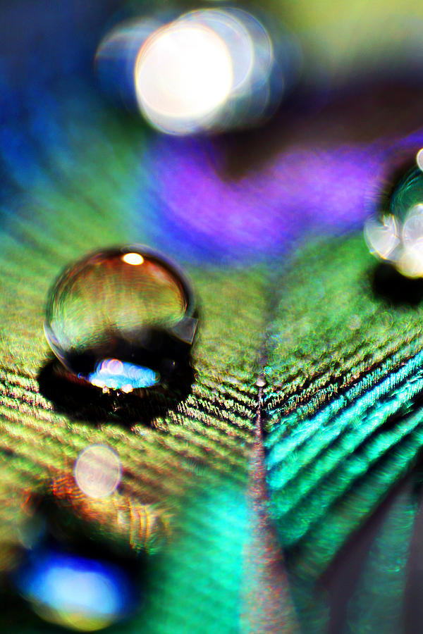 Water Photograph - Peacock Jewel by Kerry Langel